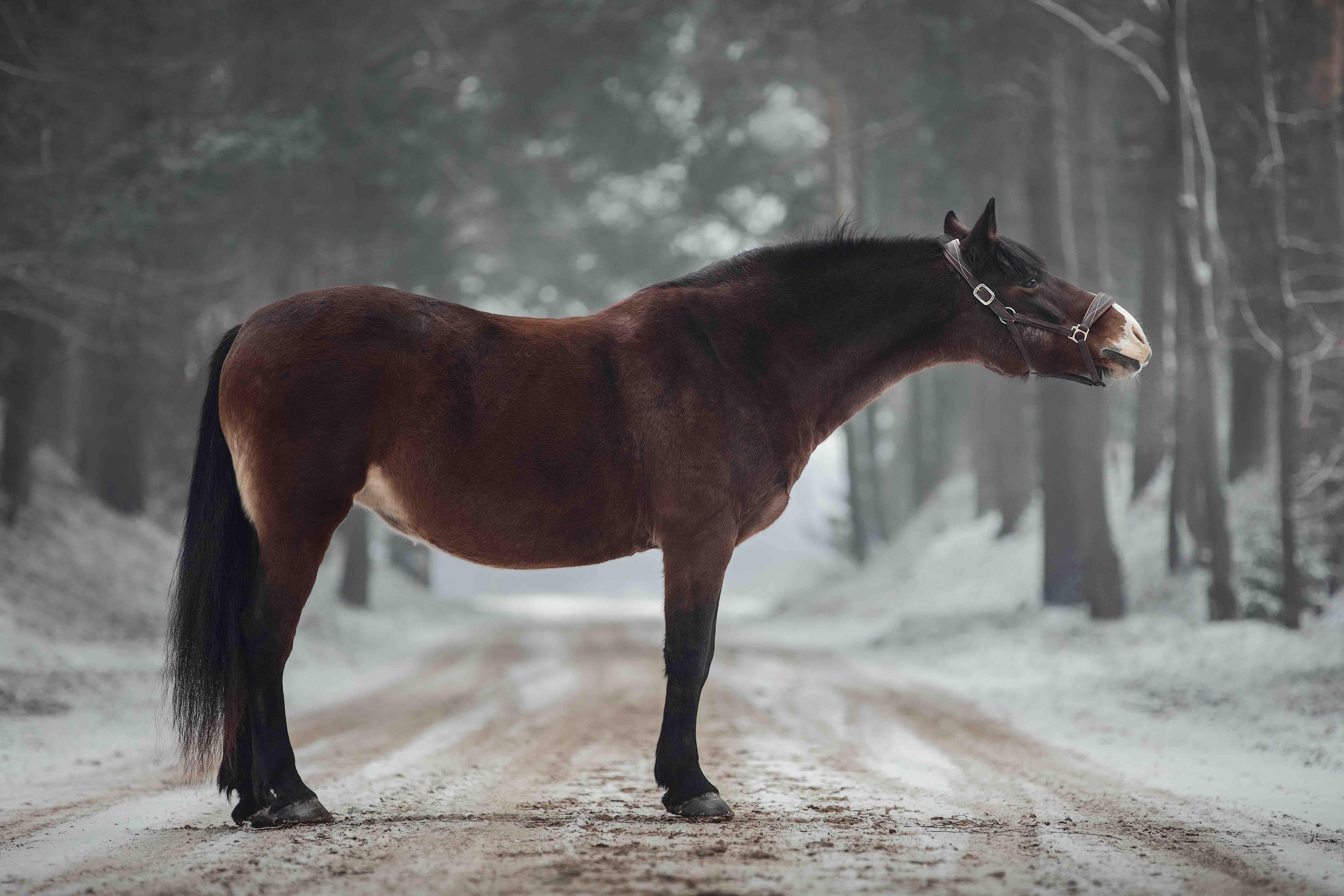 Pferd steht im Wald_low