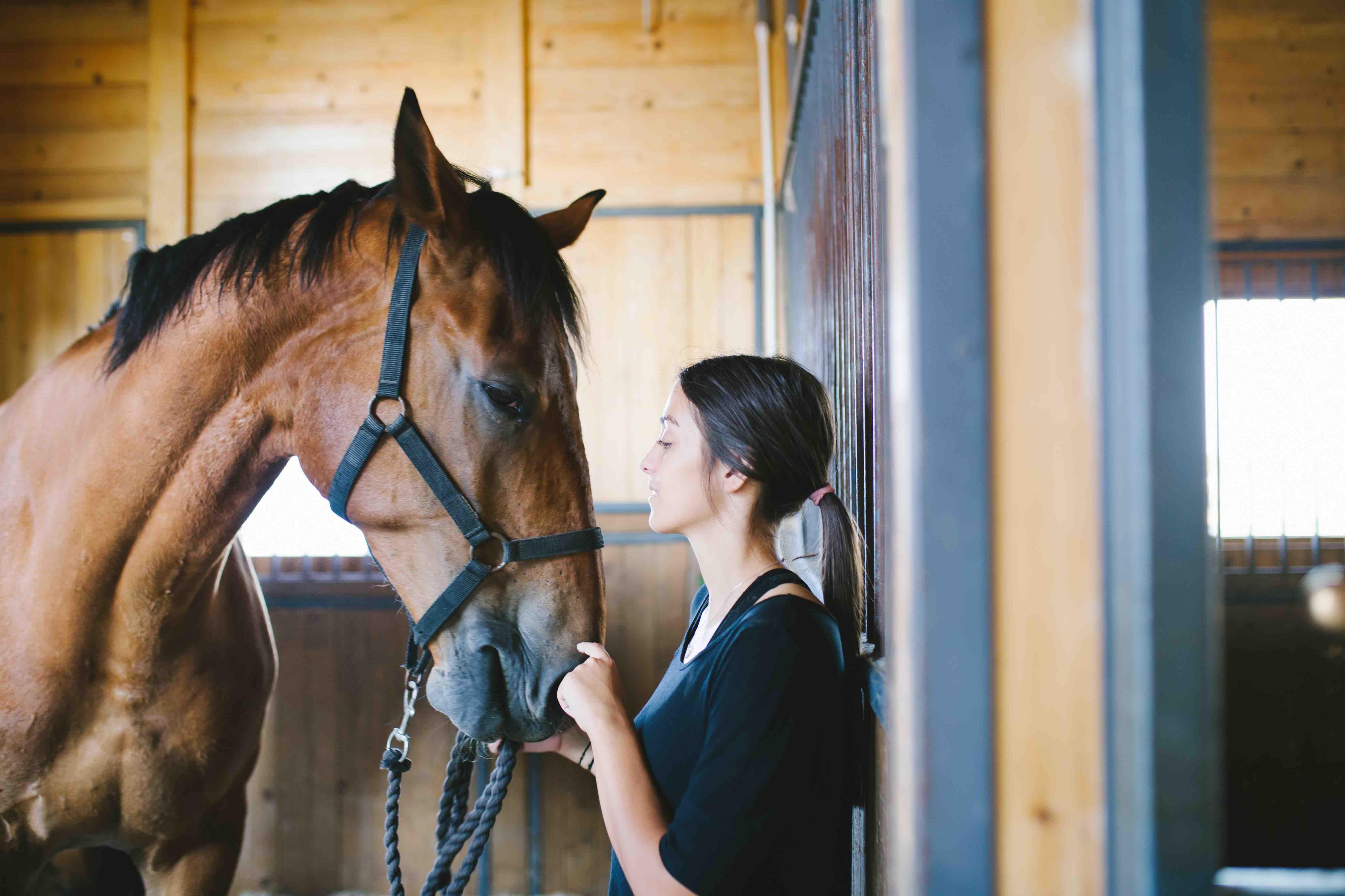 Pferd_im-Stall_Equine _74_Gastric