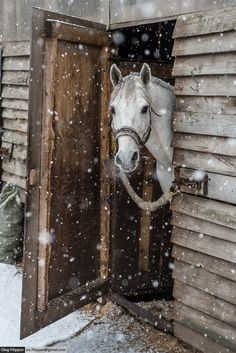 Help your Horses this Winter... - Featured Image